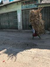 Vietnamese farm worker