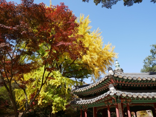 The fall foliage and palace