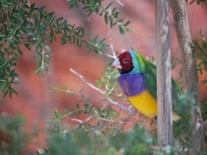 A brightly colored songbird